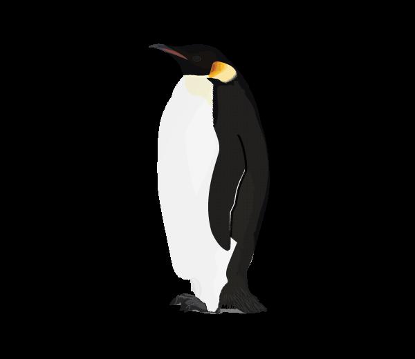 Penguin HD PNG - 92445