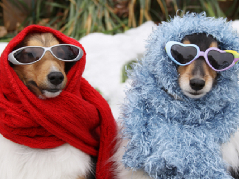 Keeping Your Pets Safe in Freezing Cold Winter Weather - People In Cold Winter PNG