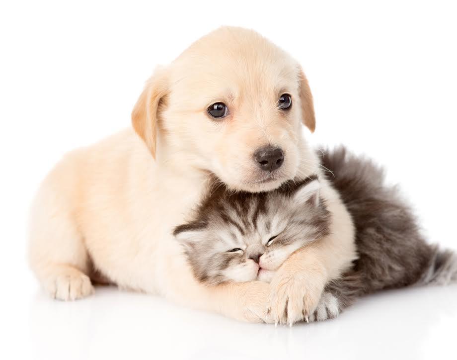 Best Animals HD Wallpapers- screenshot - Pet PNG HD