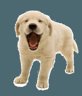 Pet PNG HD - 138158