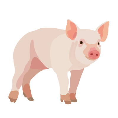 Pig PNG - 25897