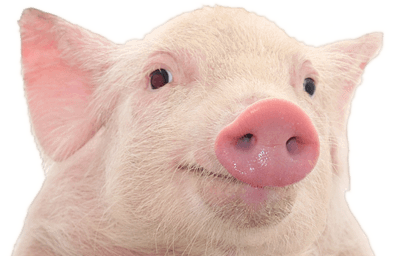 Pig PNG - 25892