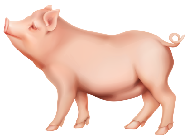 Pig PNG - 7809