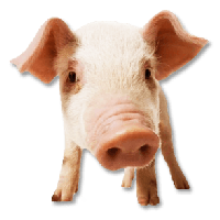 Pig Png Image PNG Image - Pig PNG