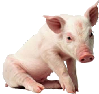 Pig PNG - 25895