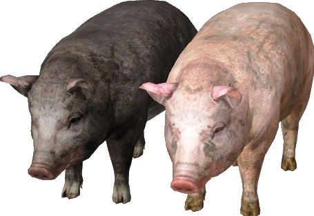 The witcher pig.png - Pig PNG