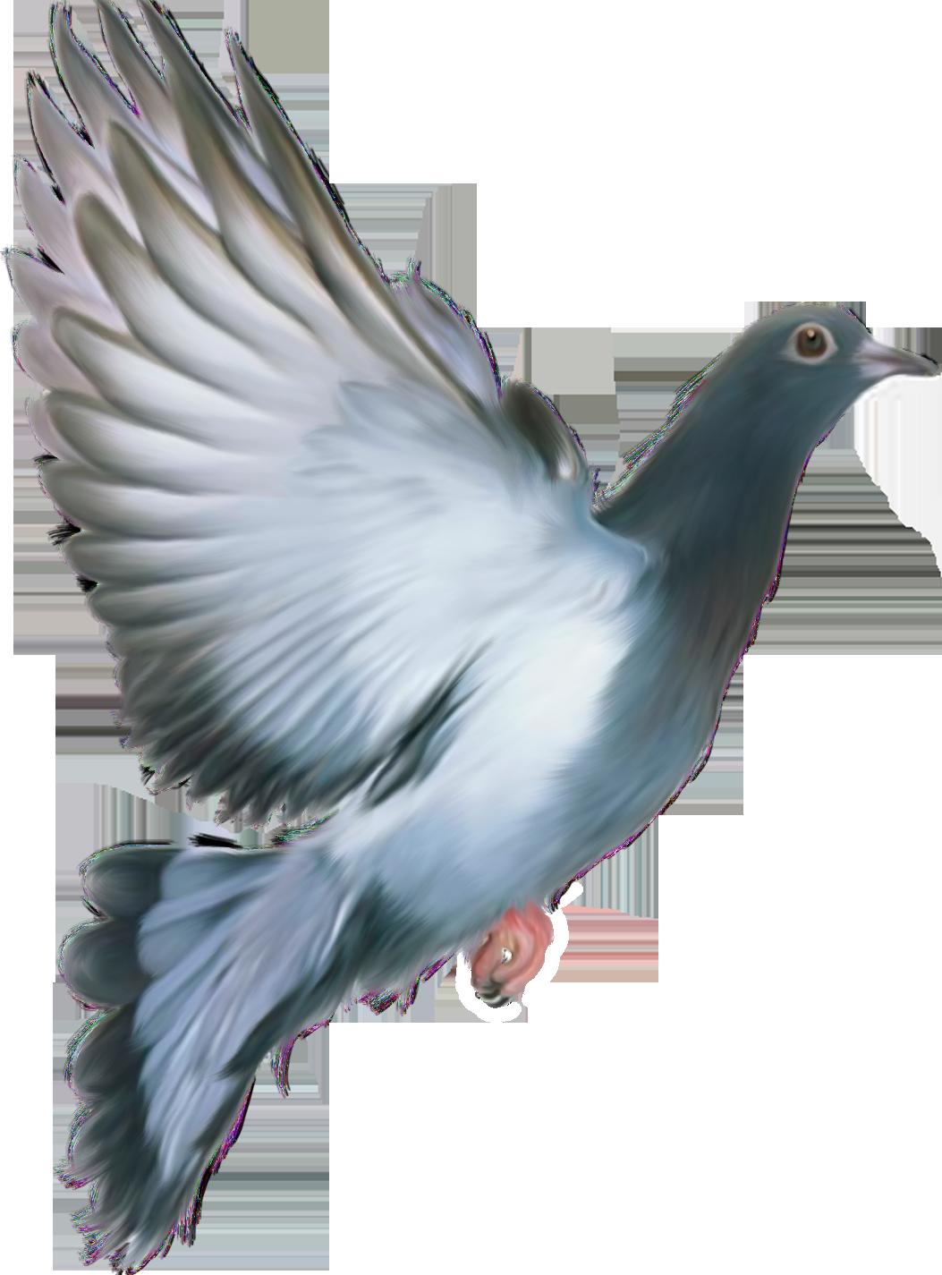 Pigeon PNG - 779