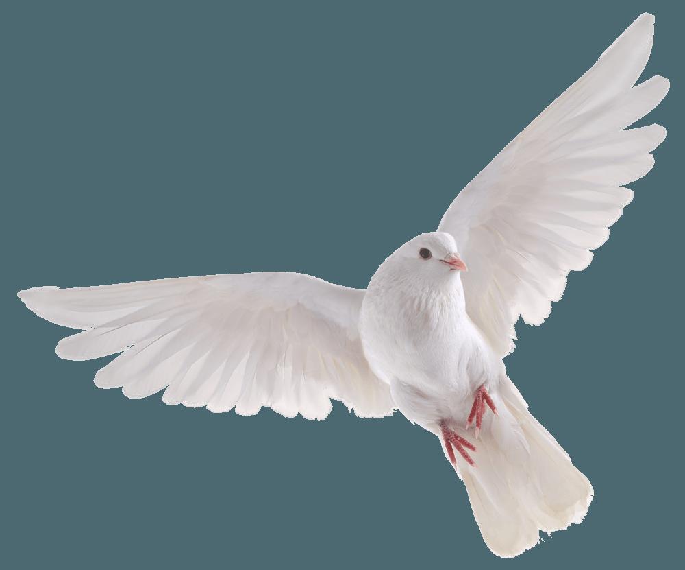 Pigeons HD PNG - 90003