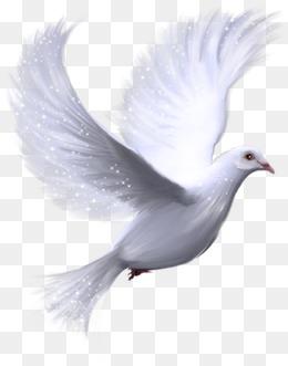 Pigeons HD PNG - 89993