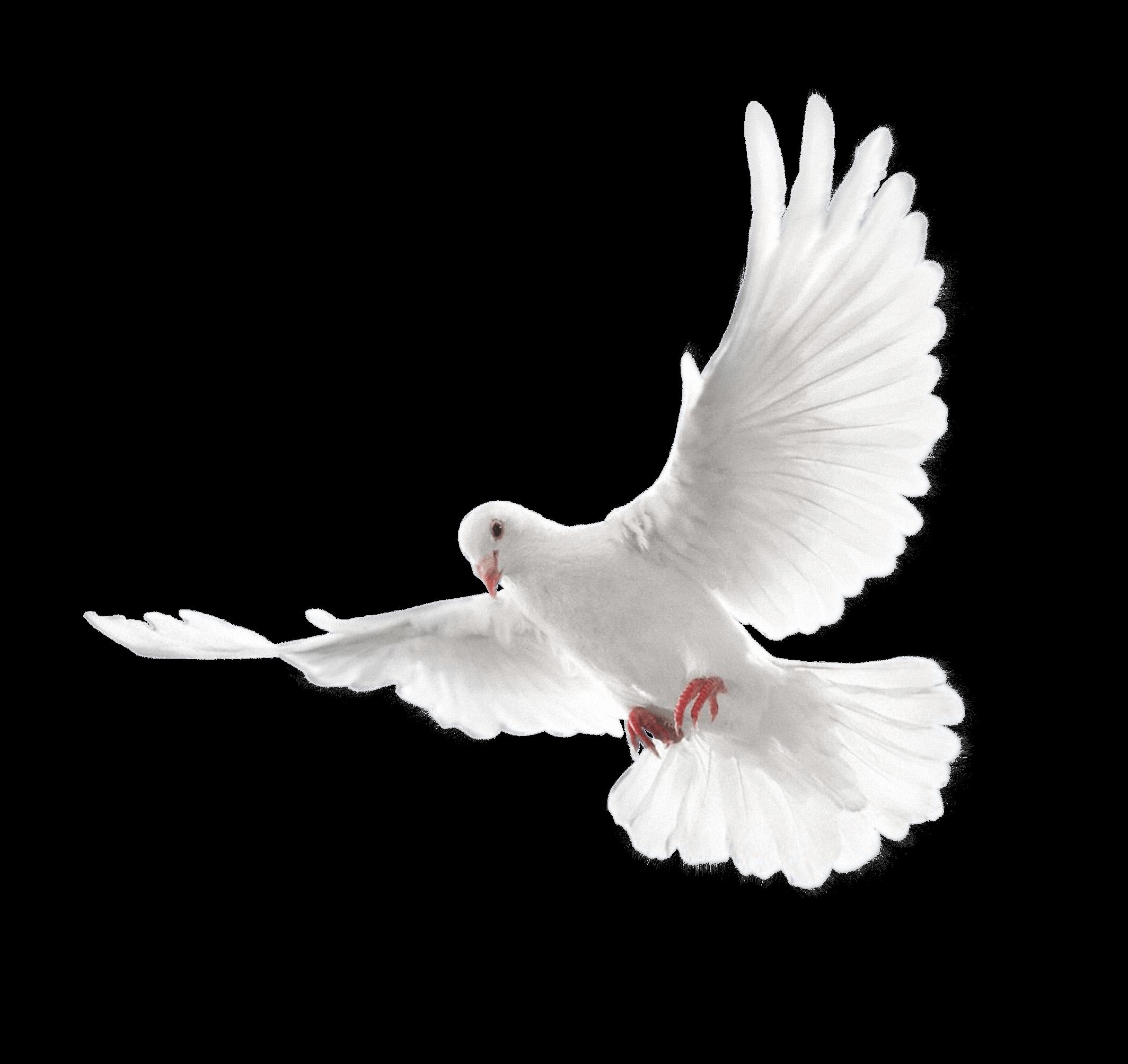 Pigeons HD PNG - 89996