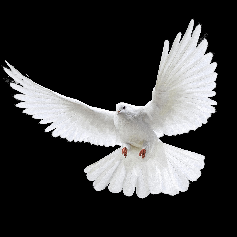 Pigeons HD PNG - 89995