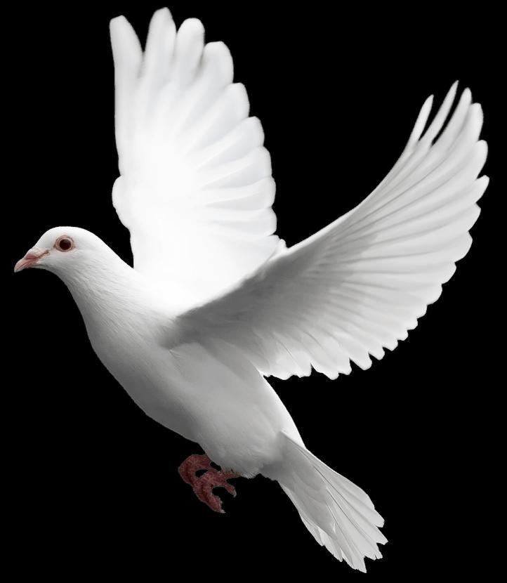 Pigeons HD PNG - 89990