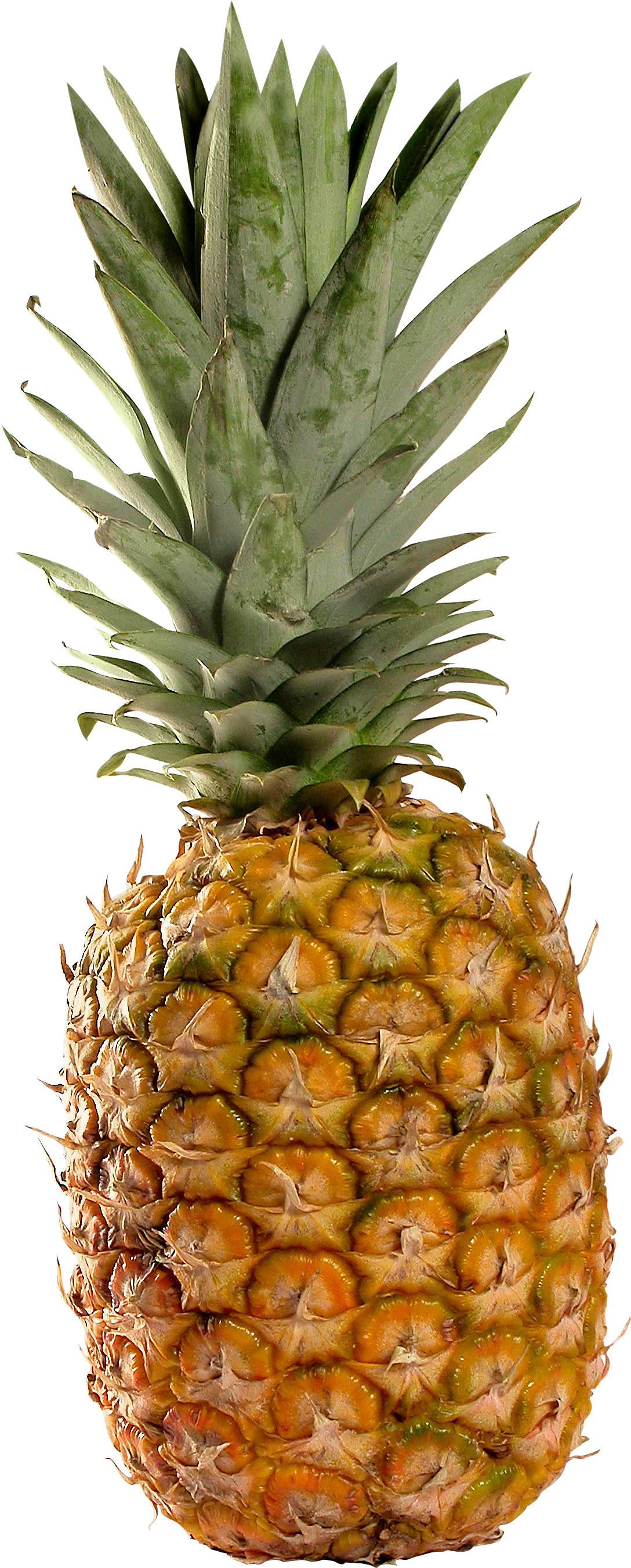 Pineapple HD PNG - 118072