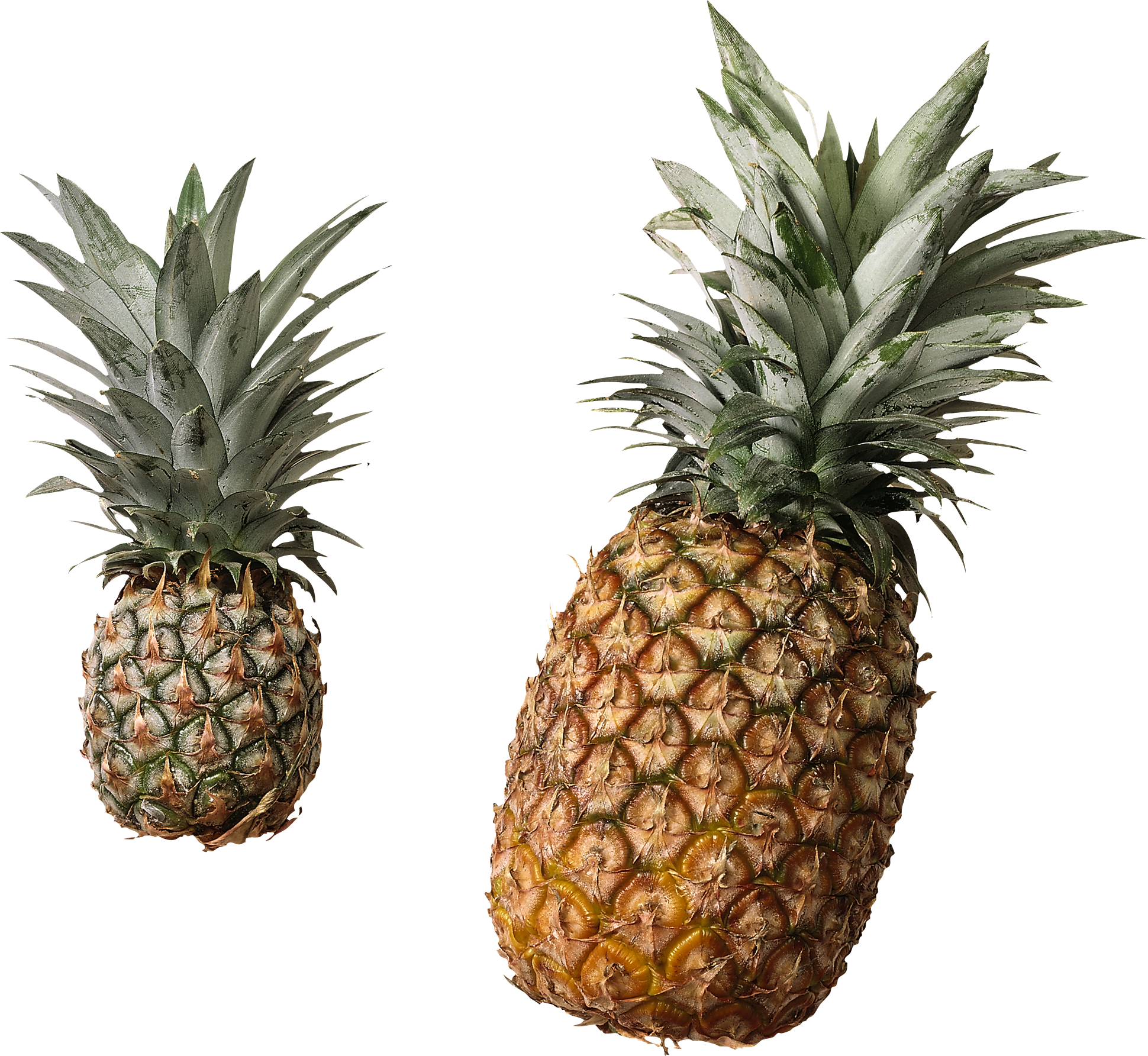Collection of Pineapple PNG.   PlusPNG