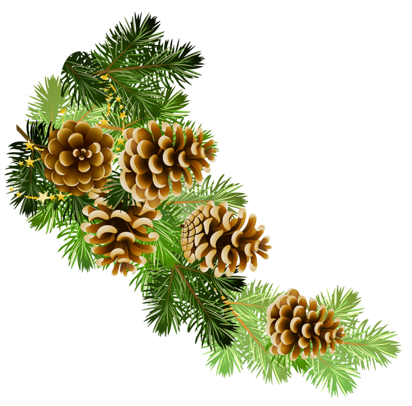 Pine and pine cones branch border clip art - Pinecone HD PNG