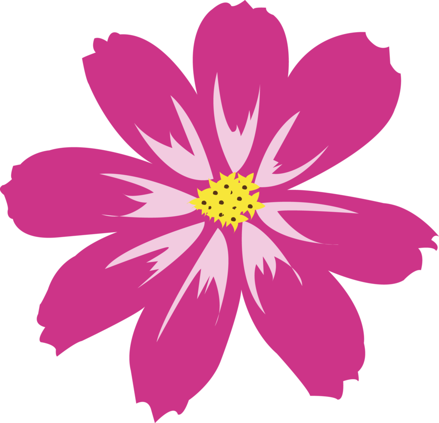 Aster PNG HD