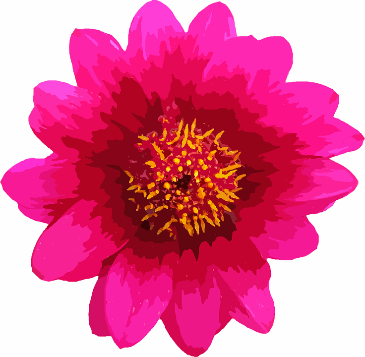Flower, Macro, Single, Pink, Daisy, Floral, Nature - PNG Single - Pink Daisy PNG HD