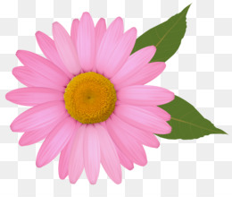 PNG - Pink Daisy PNG HD
