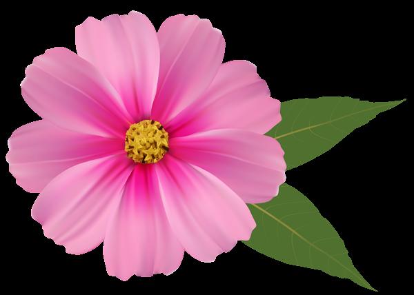 Share Wallpaper - Pink Daisy PNG HD