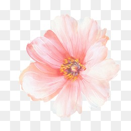 watercolor flowers, Watercolor Flowers, Design, Fresh PNG and PSD - Pink Daisy PNG HD