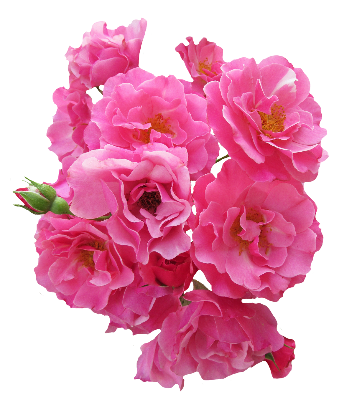 Pink Flower PNG - 132031