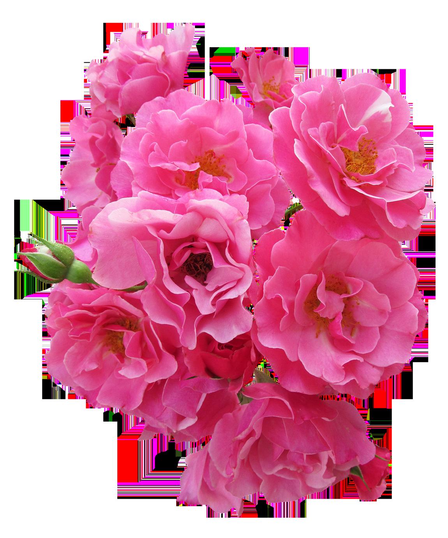 Pink Flower Png Transparent Pink Flowerg Images Pluspng