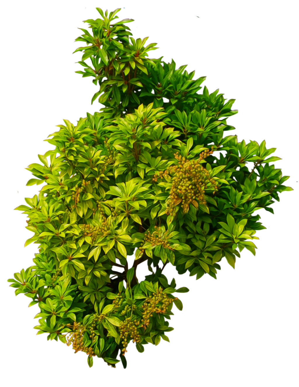 Bush PNG image - Plant PNG HD