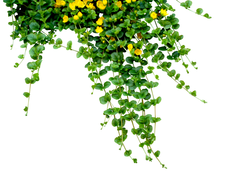 FrostBo 1,163 591 Garland By Black-B-o-x - Plant PNG HD