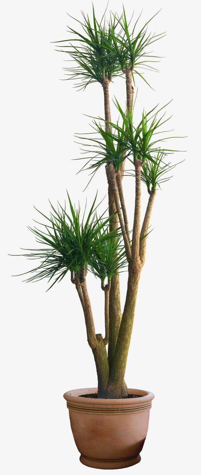 HD Plant Pot, Bonsai, Decoration, Potted Free PNG Image - Plant PNG HD