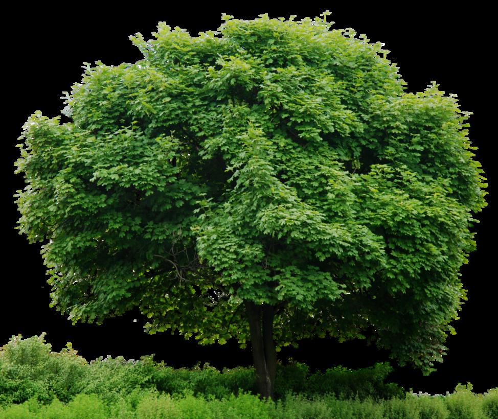 HD Tree Full Render By 3FixR PlusPng.com  - Plant PNG HD