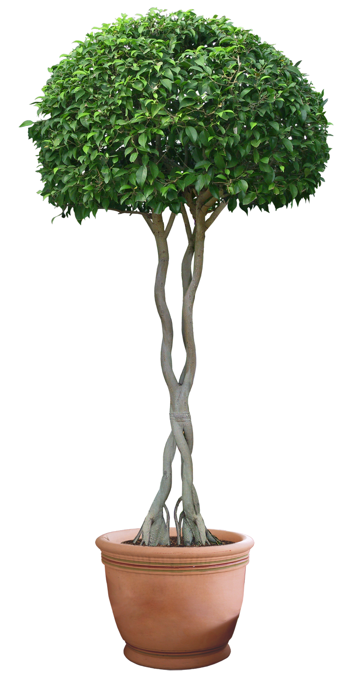 Plant Png 12 By DIGITALWIDERESOURCE Plant Png 12 By DIGITALWIDERESOURCE - Plant PNG HD