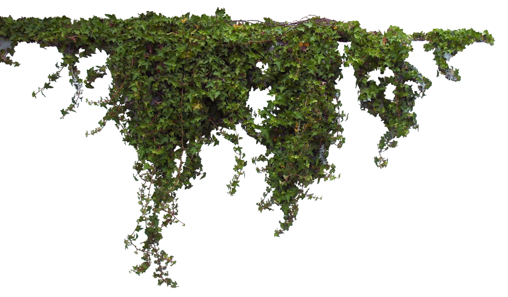 Plants - Plant PNG HD