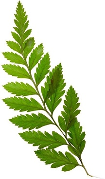 Plants leaves png images Free stock photos We have about (9,800 files) Free  stock photos in HD high resolution jpg images format . - Plant PNG HD