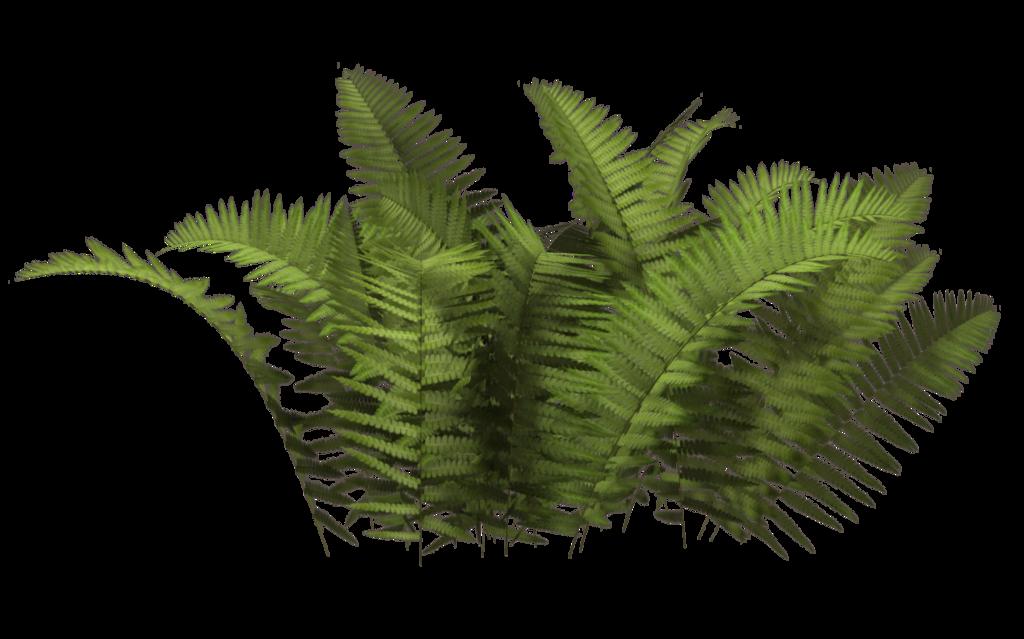 Plants PNG HD - Plant PNG HD