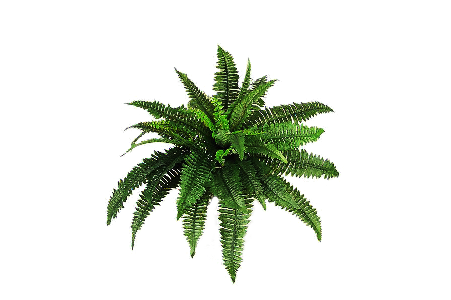 Plants Png Pic PNG Image - Plant PNG HD