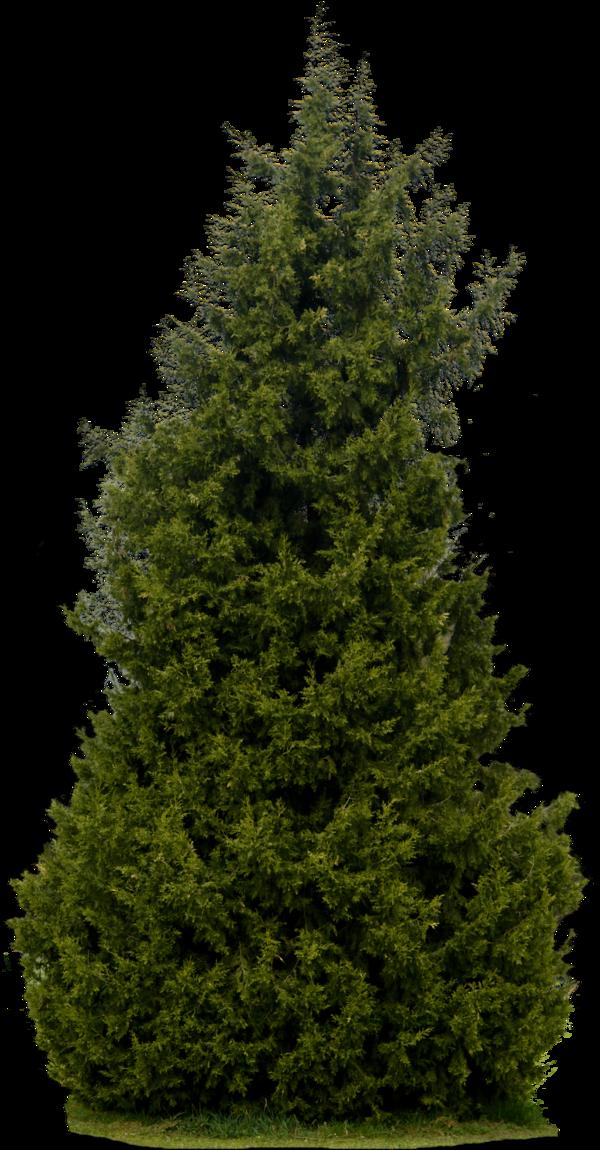 Plants PNG - 20591
