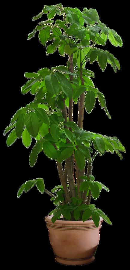 10 Free Plants u0026 Flowers