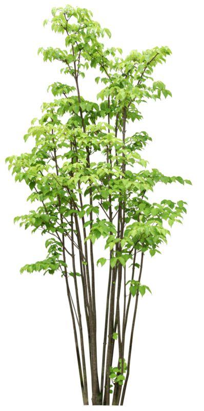 arbre,tubes,png - Plants PNG
