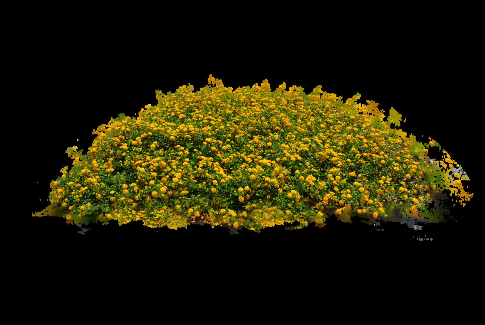 bush plant png - Buscar con Google - Plants PNG