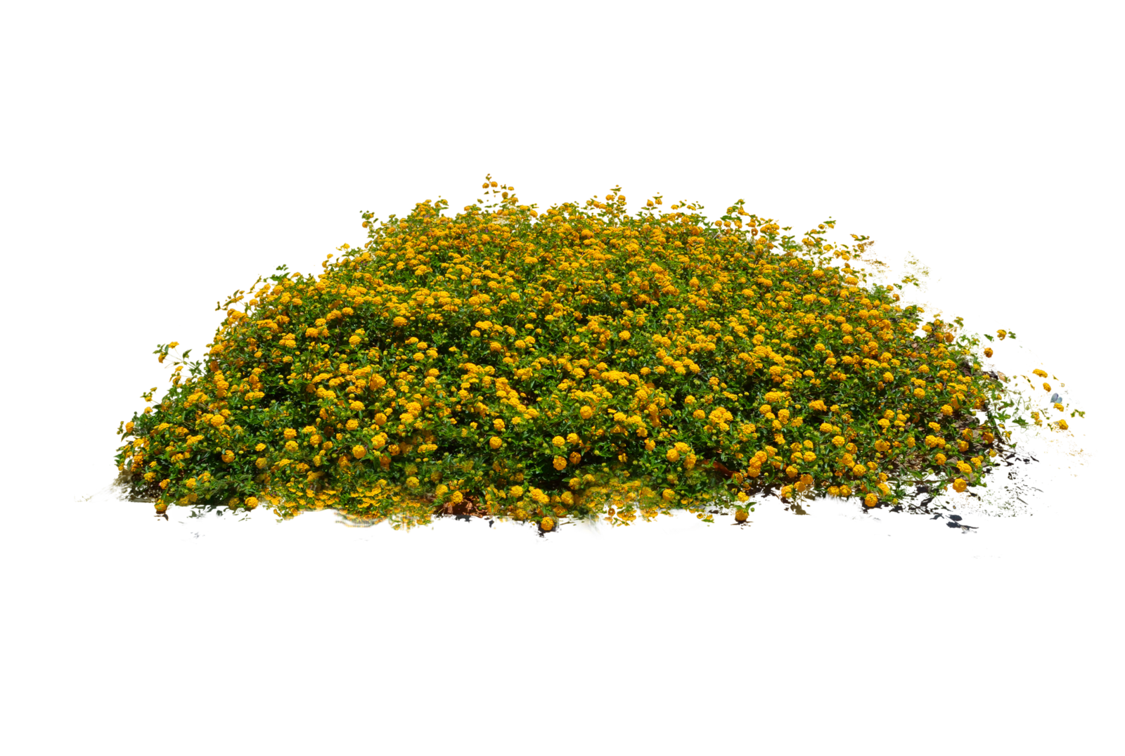 Plants PNG - 20581