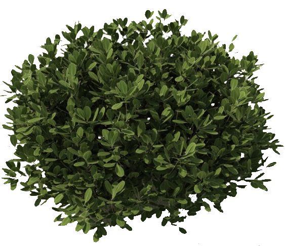Plants PNG - 20586