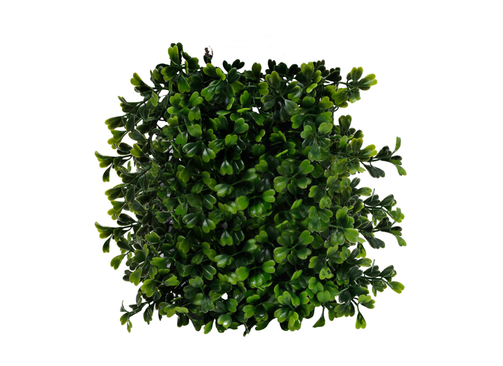 Plants Png Pic PNG Image