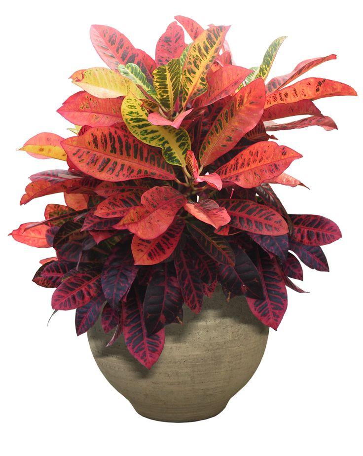 Plants PNG - 20576