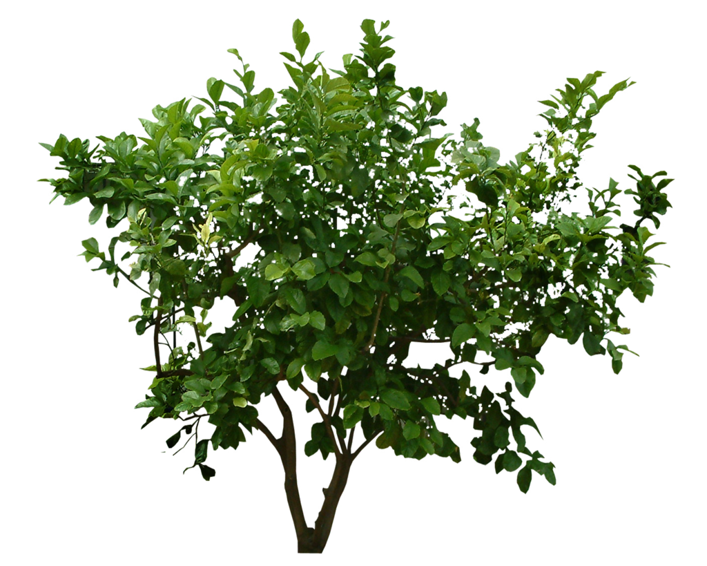 Plants Png File PNG Image - Plants PNG