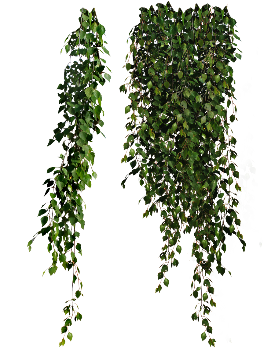 Similar Plants PNG Image