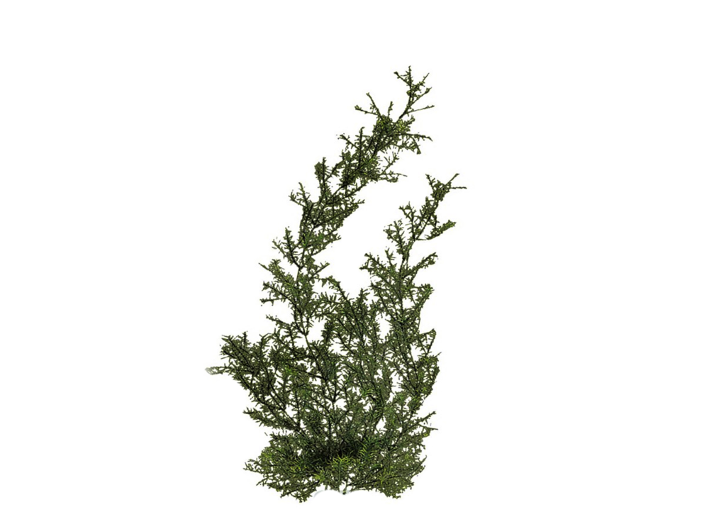 Png Plant 2 by Moonglowlilly