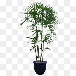 Potted Plants - Plants PNG