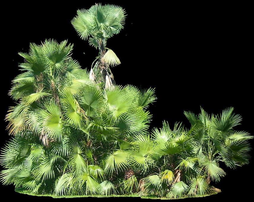 Plants PNG - 20592