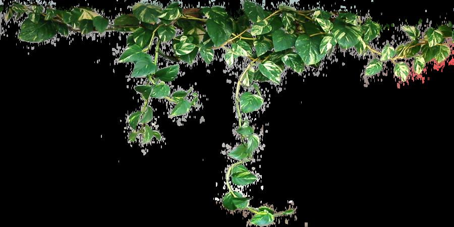 Similar Plants PNG Image