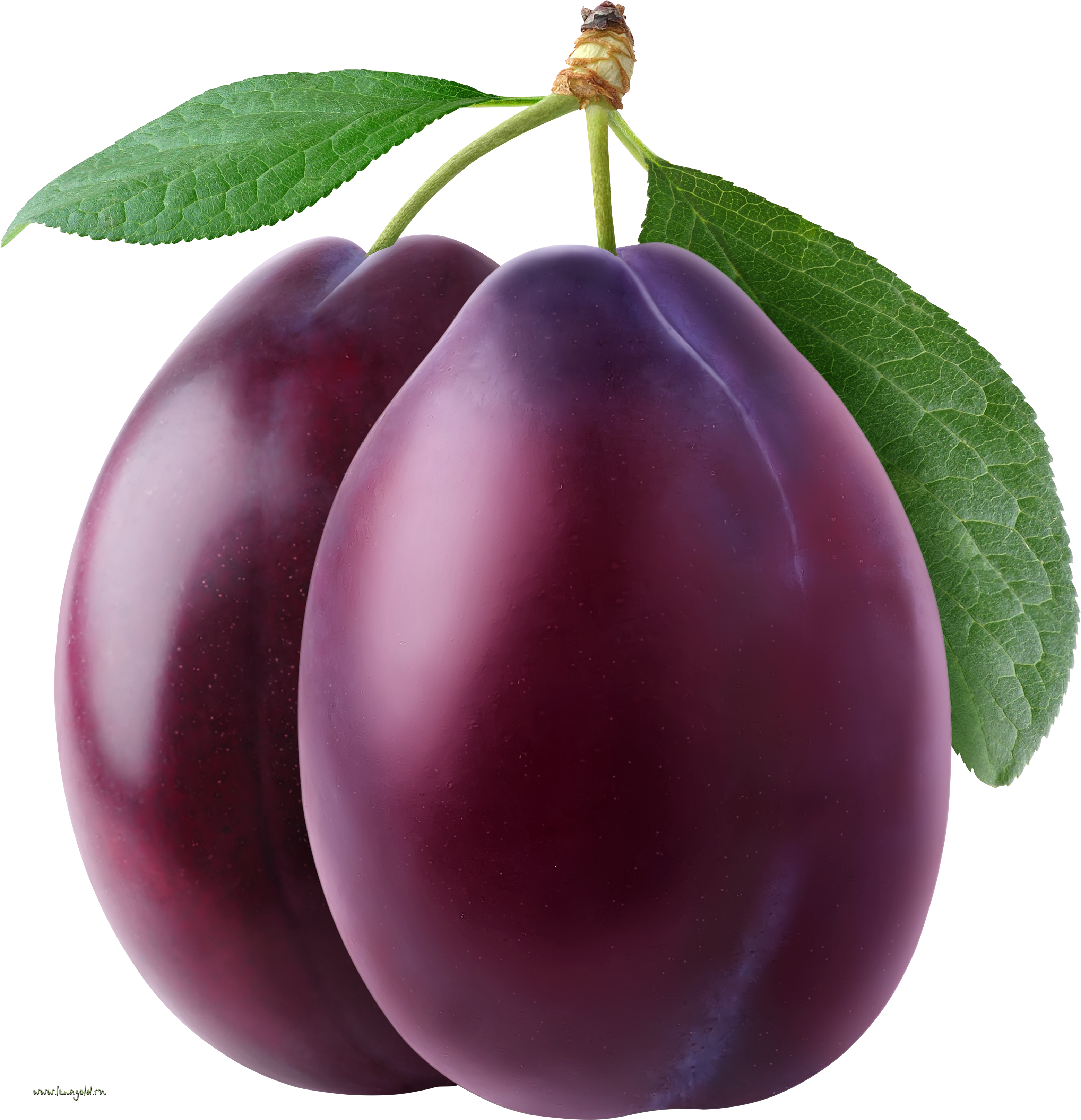 Plum PNG image - Plum HD PNG